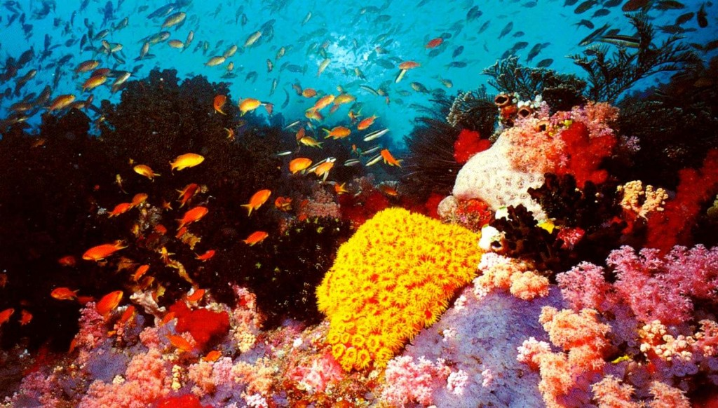 Great-Barrier-Reef-2