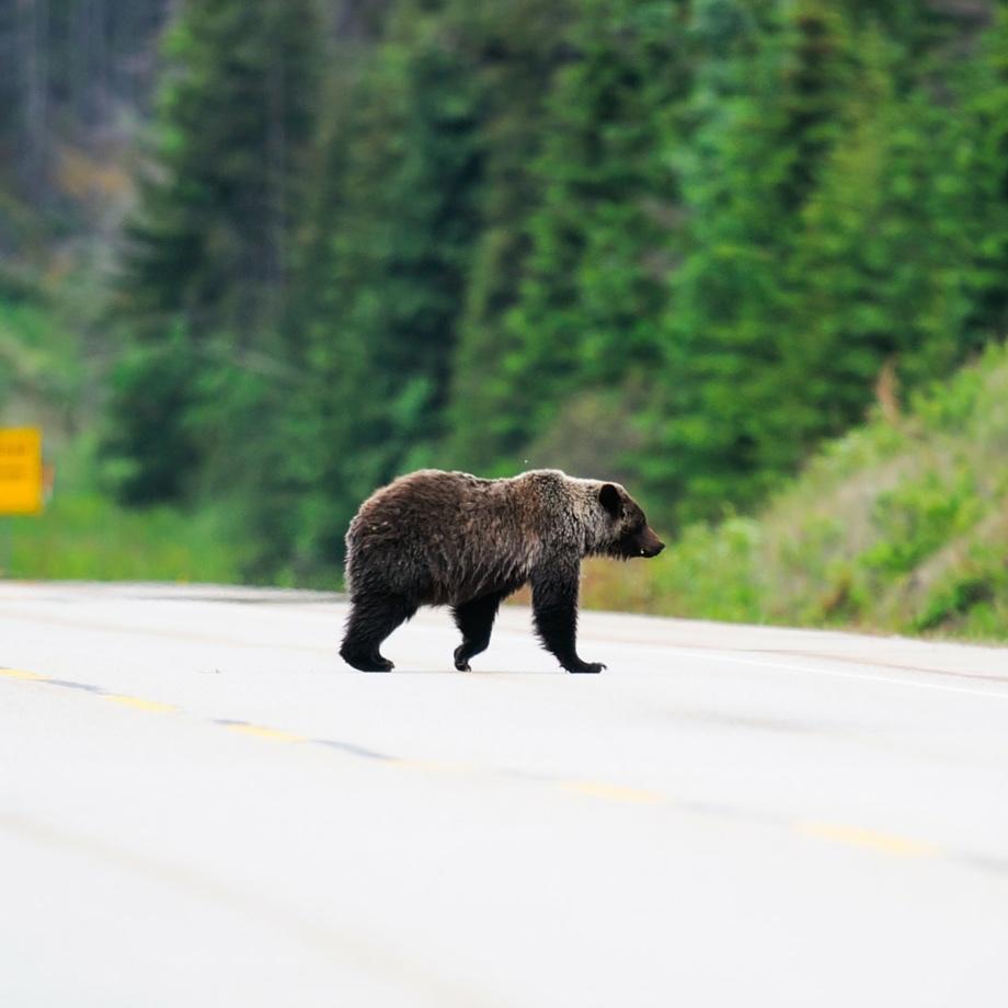 tour-operator-canada-jasper-national-park